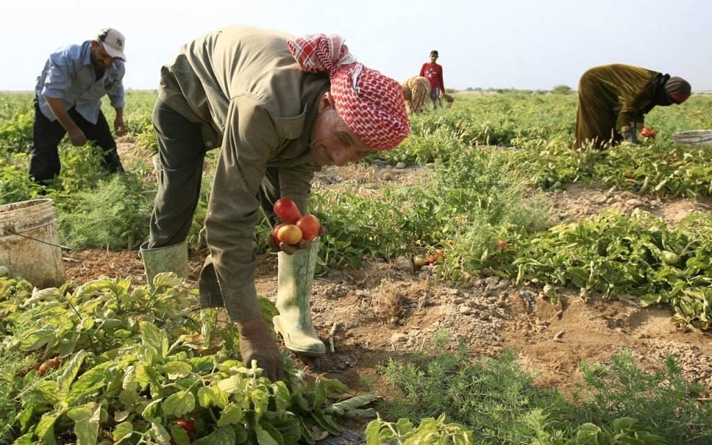Photo of مصر تبحث دعم صغار المزارعين مع برنامج الأغذية العالمي